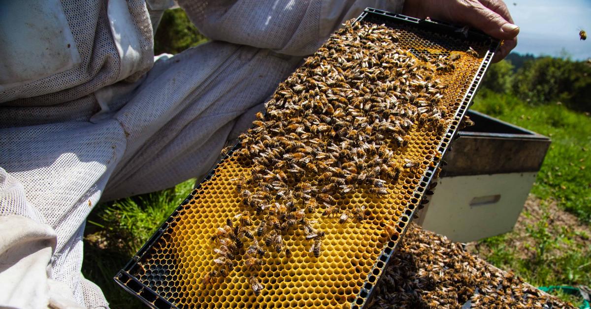 MGO UMF Manuka Honey New Zealand